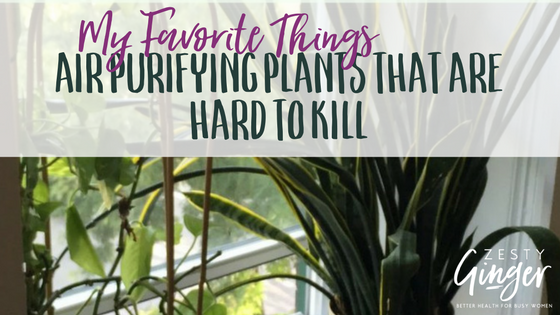 My Favorite Things: Air Purifying Plants That Are Hard to Kill